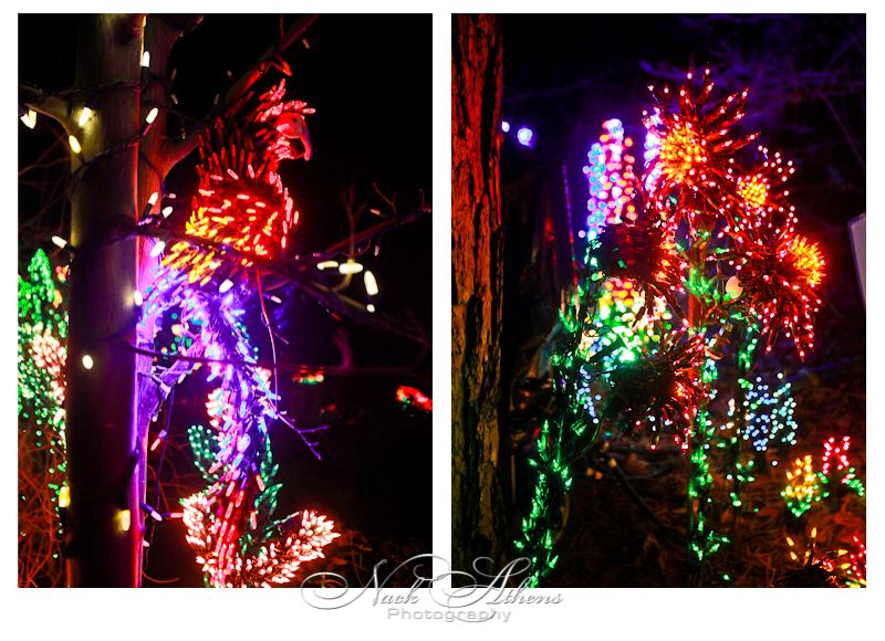 wpid-parrot-2010-12-24-11-29.jpg